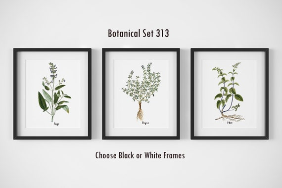 Botanical Prints Set Of 3 Framed Wall Art Farmhouse Wall Etsy