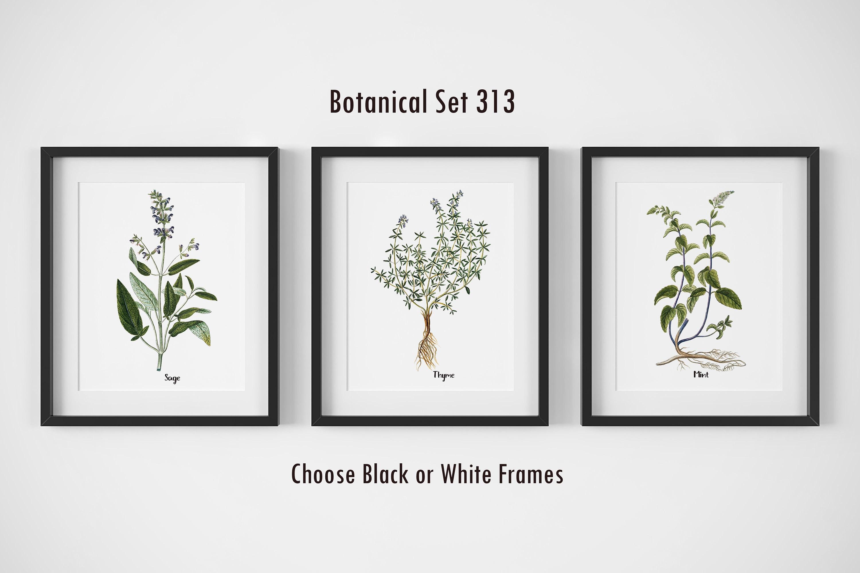 Botanical Prints, Set of 3, Framed Wall Art, Farmhouse Wall Decor ...