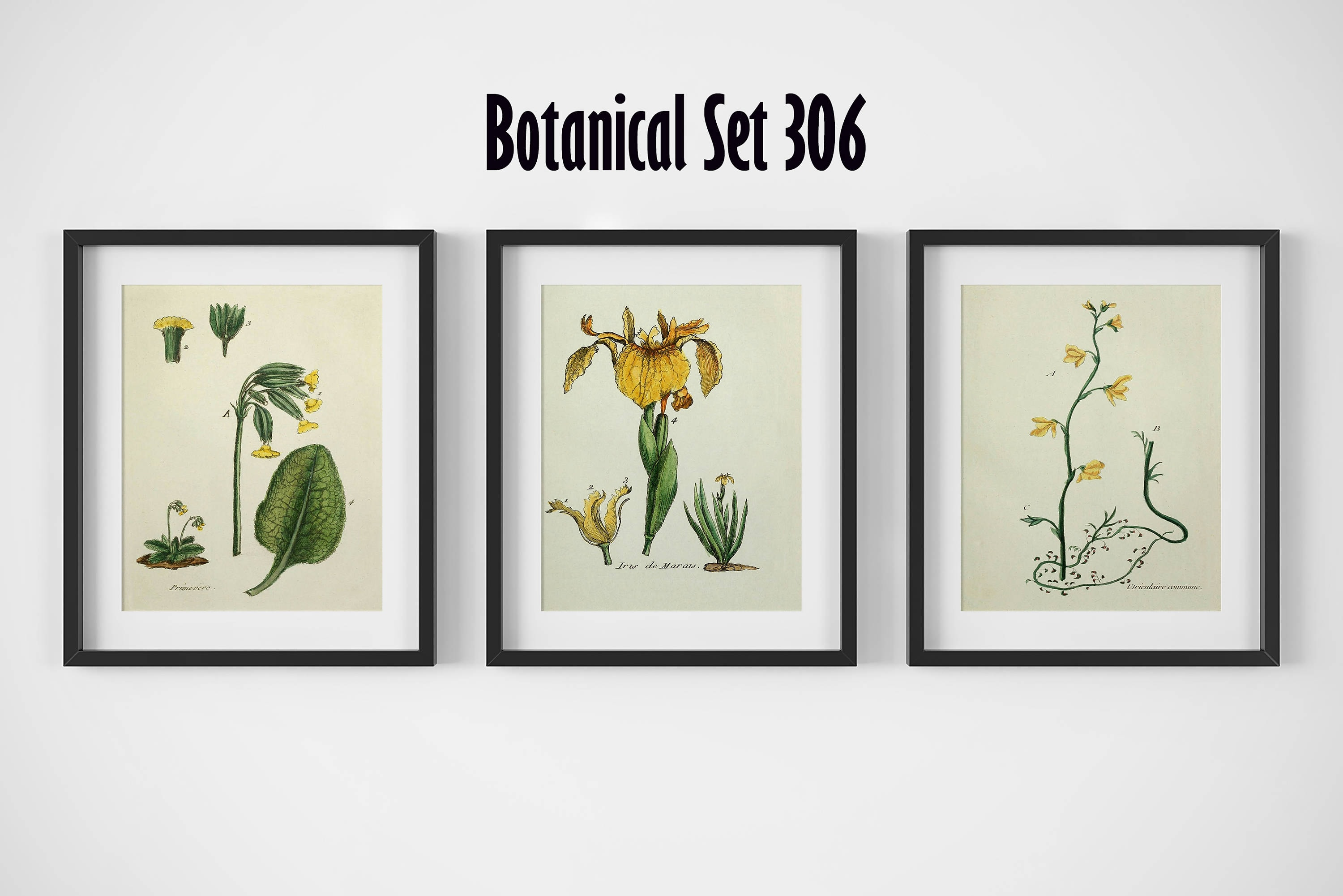 Botanical Prints, Framed Wall Art, Set of 3 Framed Prints, Botanical ...