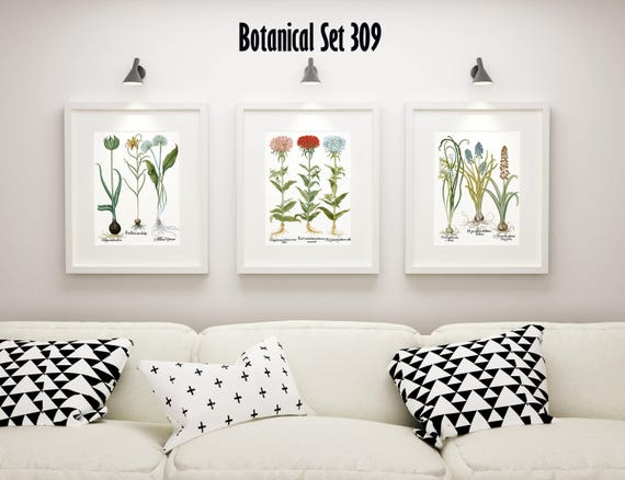 Botanical Print Set of 3 Framed Botanical Art Vintage Floral | Etsy