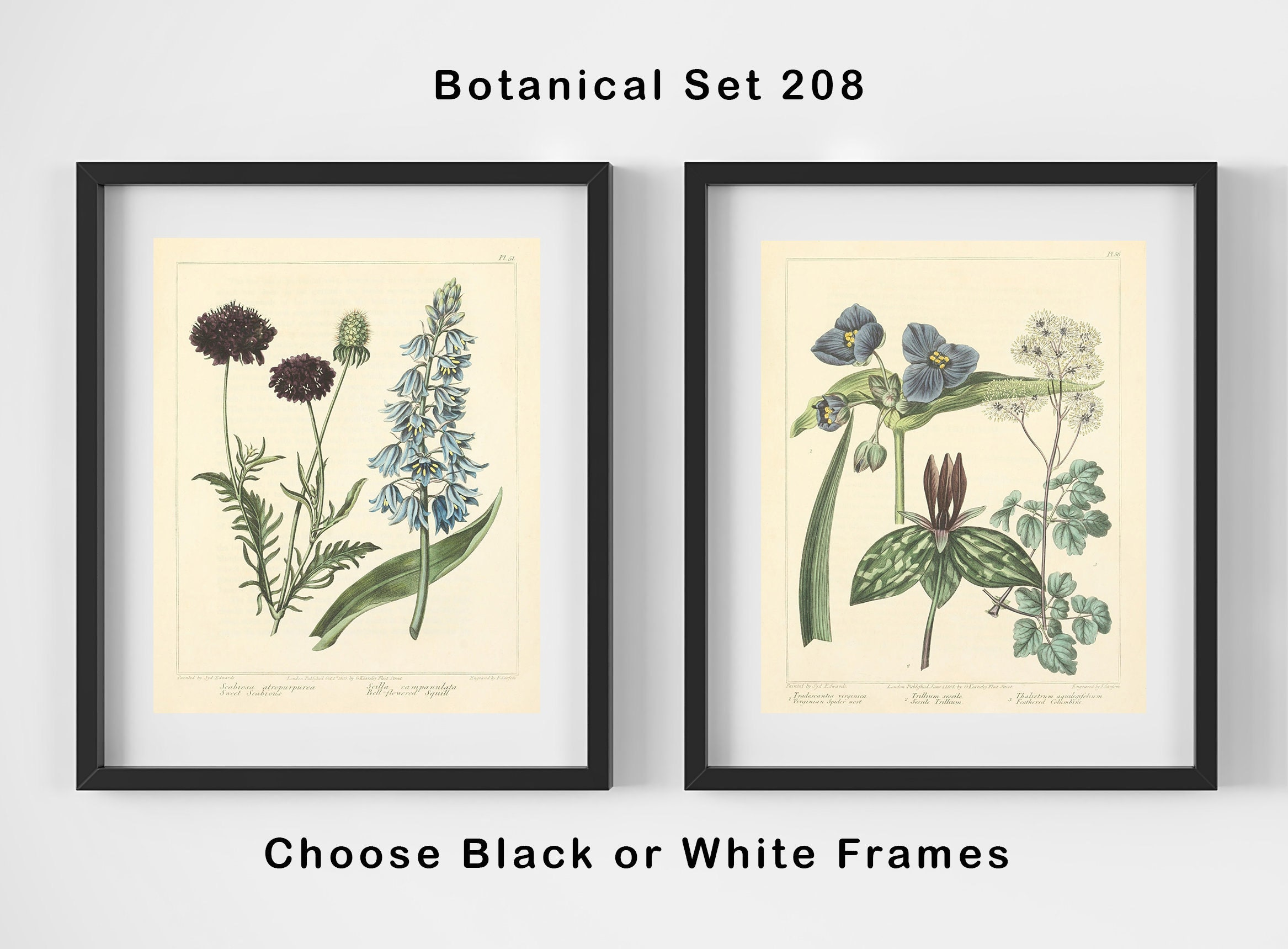Botanical Print Set -Antique Botanical Prints - 2 Print Set - Matted ...