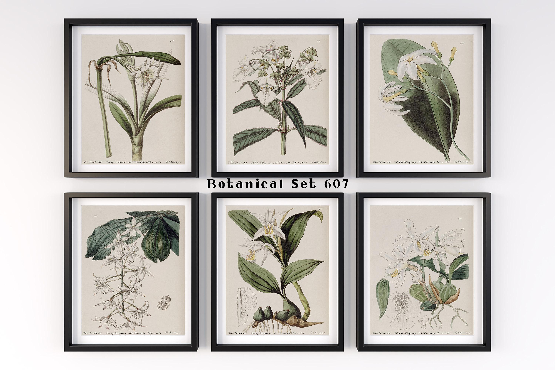 White Flower Print Set Botanical Of 6 Wall Art