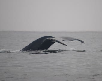 Whale Fluke - Stock Photography, Digital Download, Photograph, Nature