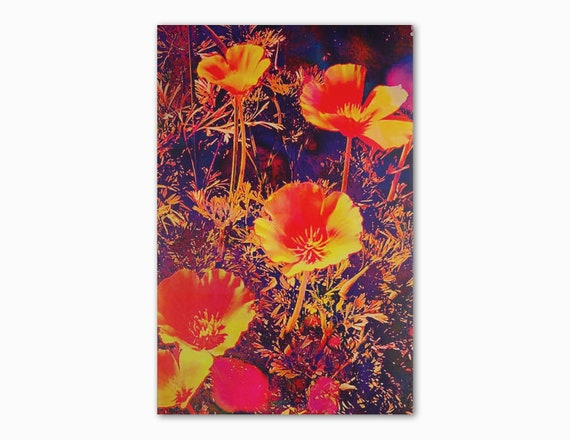 'Poppies In The Sun' Print
