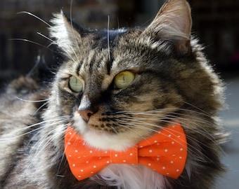 Orange polka dot cat bow tie, Halloween polka dot cat collar, Halloween cat bow tie collar, kitten collar, cat collar, orange cat collar,