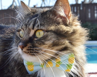 Pineapple bow tie for cats, pineapple collar for cat, blue cat bow tie, fruit cat bow tie, summer bow tie for cat, bow tie for kitten