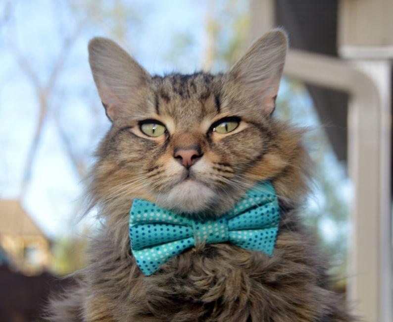 4821b9771 Summer ocean cat bow tie summer cat bow tie summer cat | Etsy