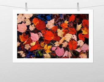 leaves, orange, red, gold, nissitissit river, brookline, new hampshire, fall foliage, photography, fine art print