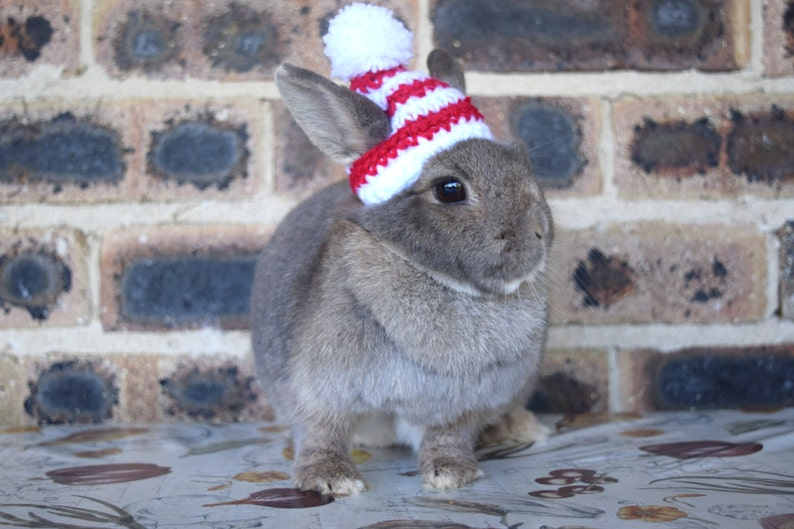 Christmas beanies for bunnies pet rabbit beanies red and image 0