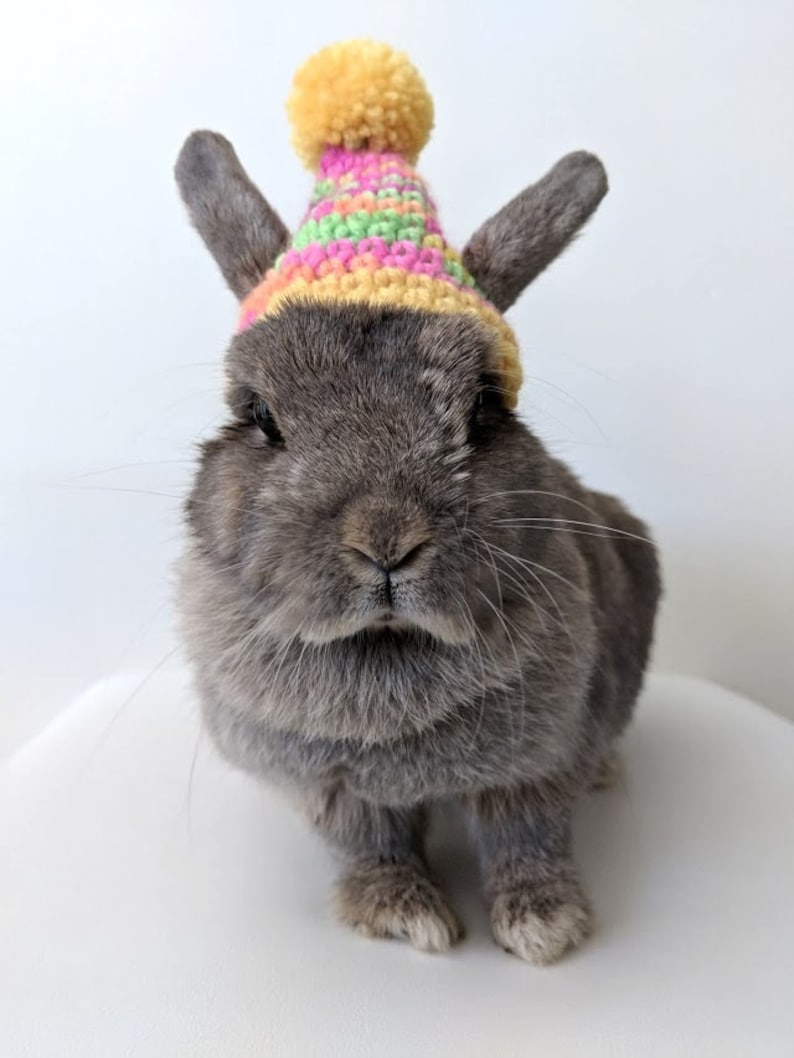 Piccolo berretto Sunshine per coniglietti coniglio beanie  68d843844bc9