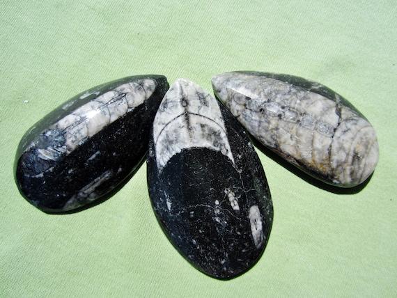 Fossil ORTHOCERAS Lot of Polished Nautiloid Cephalopod Paleozoic Morocco 86g