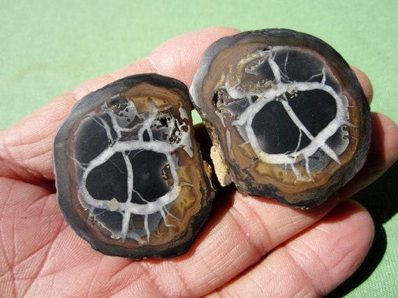 SEPTARIAN Nodule Polished Pair Geode Halves Morocco 47g