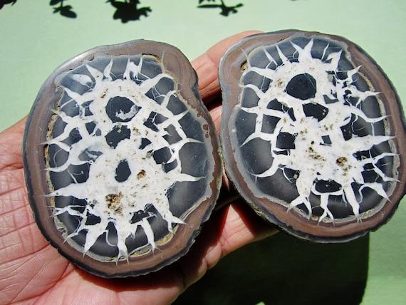 SEPTARIAN Nodule Polished Pair Geode Halves Morocco 364g