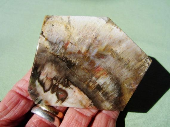 PETRIFIED WOOD Slab Polished Madagascar 95g