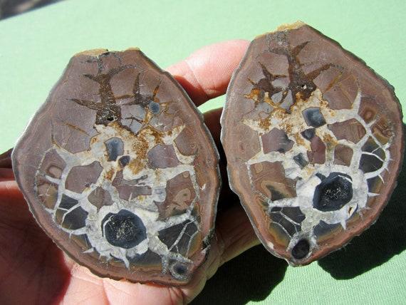 SEPTARIAN Nodule Polished Pair Geode Halves Morocco 263g