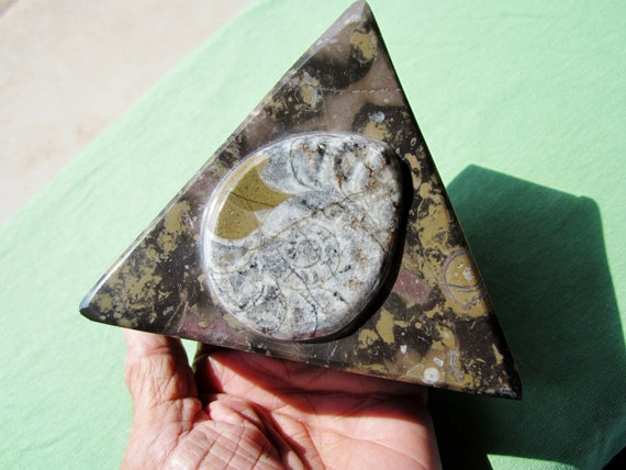 Polished AMMONITE TRINKET Box Triangle Handcrafted Fossil Morocco 510g