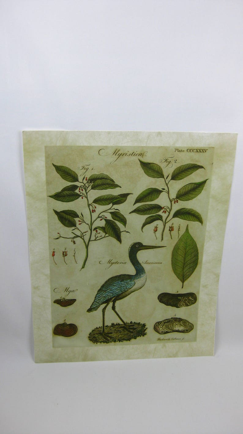 The Sommers Collection Bird Botanical Print with Shells and image 0