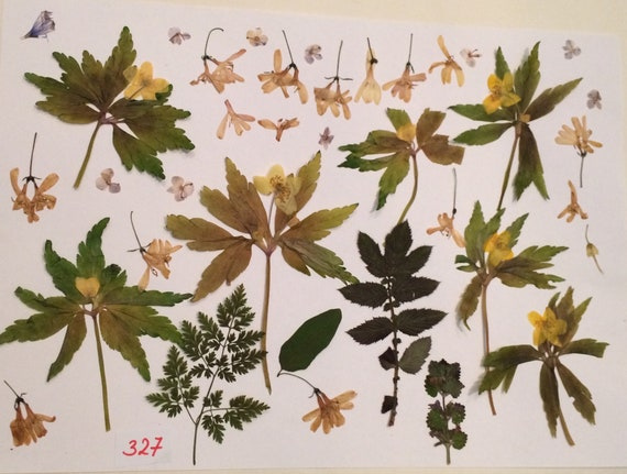 Dried Pressed Flowers Real Green Leaves Dried Pressed Leafs Etsy