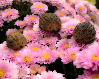 Hedgehogs -Hand Carved Miniature Walnut Hedgehog