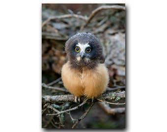 Forest Fairy,Tiny Owl,Cute Owl Print,Owlet,Fairy,Bird Photography,Muppet,Cute Owl,Tiny Owl Photo,Adorable,Small Owl,Owl,Forest Creature,Cute