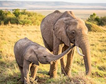 Limited Edition Elephant Picture, Elephant Art, Elephant Photo, Africa Photo, Africa Picture, Serengeti, Elephant, Wall Art, Wildlife Photo