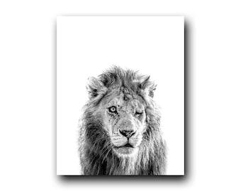 The Veteran, Lion Photograph, Lion Image, Old Lion, Scar, Safari Picture, Safari Photography, High Key, Animal Photo, Cat Photo, Cat Picture
