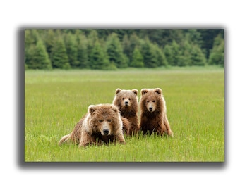 Grizzly bear family posing for a portrait