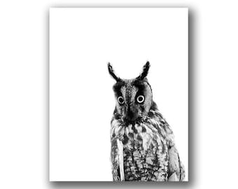Long-Eared Owl - Part of a Black & White owl photo series from Grey Ghost Nature Photography