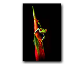 Frog Photo, Frog Print, Frog Image, Tree Frog, Colorful Frog, Cute Frog, Red-eyed Tree Frog, Wildlife Print, Wildlife Image, Frog Art, Frog