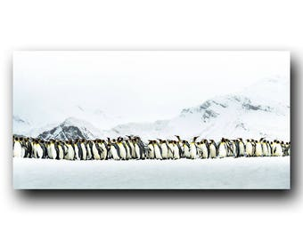 March of the Penguins, Antarctic Picture, South Georgia Island, Snow Bird, Amazing Nature, Penguins, King Penguin, Marching, Journey, Trek