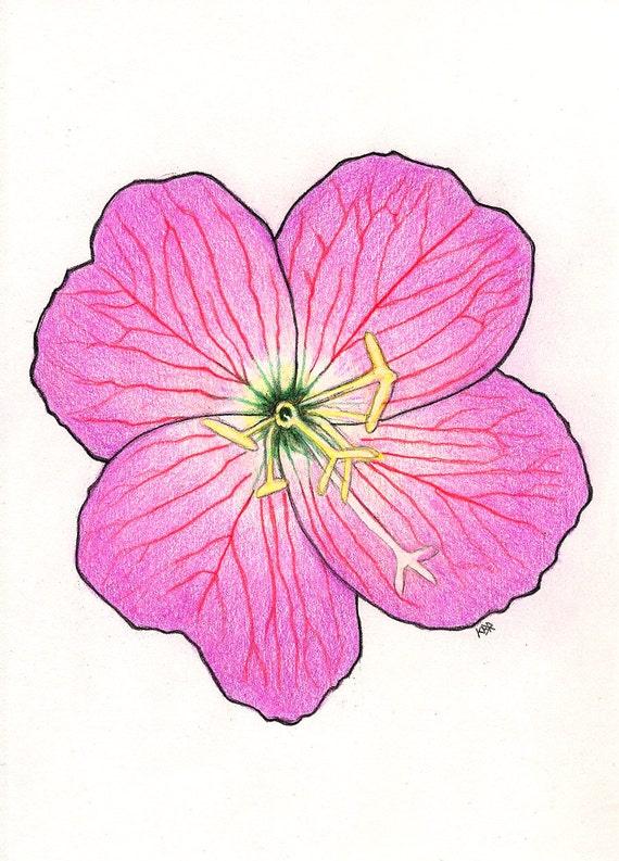 Fleur Rose De Couleur Dessin Au Crayon Original