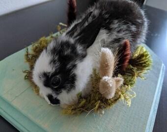 Taxidermy rabbit   Etsy