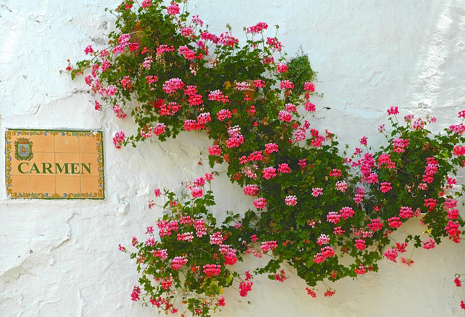 Fascinating Geraniums On A Spanish Wall On Carmen Street Old