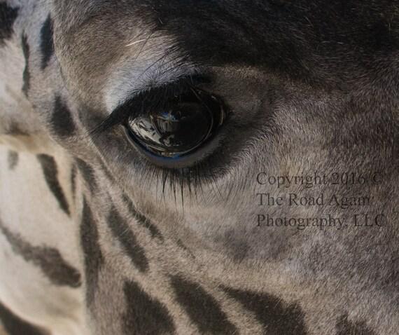 Giraffe Animal Photography Nature Decor Animal Living Room Nursery Decor Safari Art Giraffe Photography Savanna Decor Africa