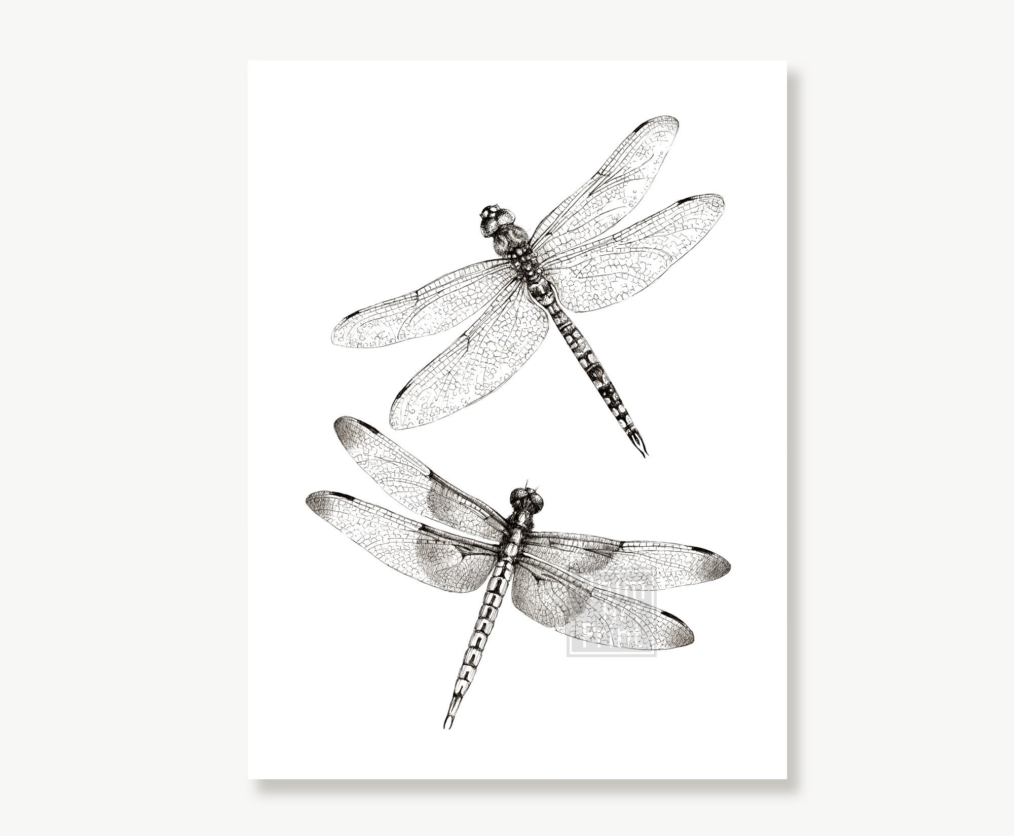 Dragonfly Sketch Insects Black And, Dragonfly Bathroom Wall Decor