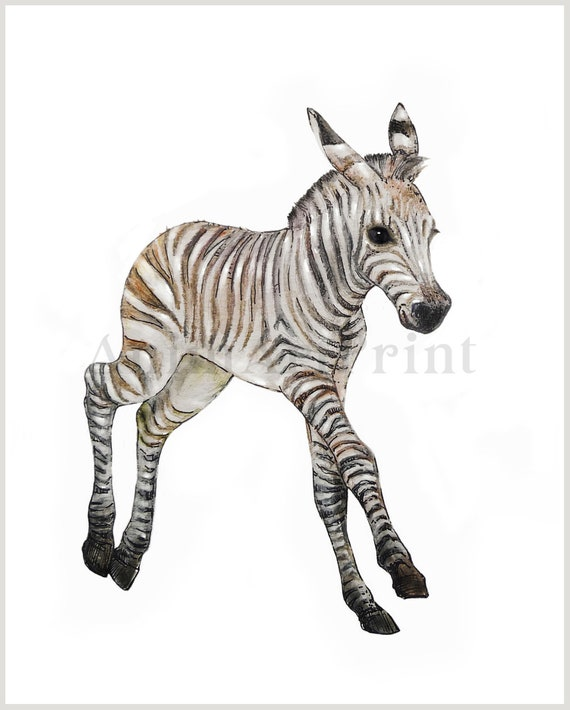photo about Zebra Printable named Zebra Print Zebra Nursery Artwork Zebra Printable Boy or girl Animal Prints Safari Nursery Artwork Electronic Down load Zebra Watercolor Zebra Nursery Decor