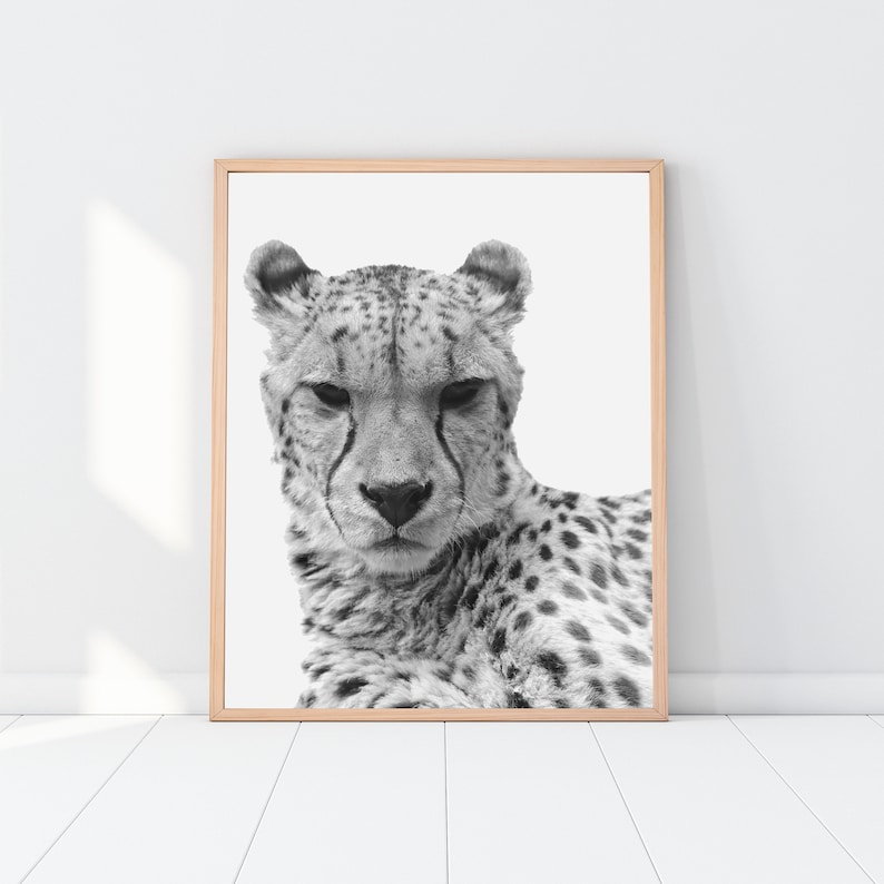Matted Winter White Tiger Foil Art Print Affordable Animal Art 8x10