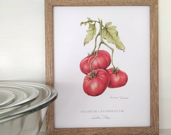 Heirloom Tomatoes Botanical Art print, by Kristen Johns, 8x10 inches, kitchen art for the plant loving home