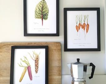 Set of 3 Vegetable Botanical Art Prints, by Kristen Johns, 8x10 inches, kitchen art for the plant lover, gardener or botanical enthusiast