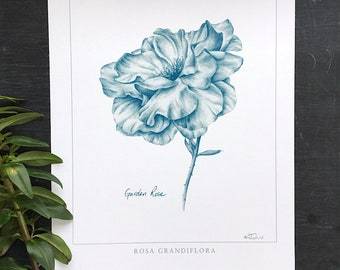 Garden Rose Botanical print