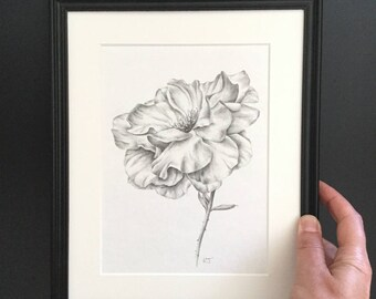 Garden Rose original drawing