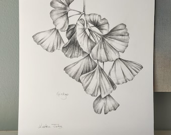 Gingko leaves - an original botanical drawing by artist Kristen Johns, graphite, 8x10 inches, for the nature and art lover