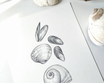 West Coast Sea Shells (part 1) - an original graphite drawing by Kristen Johns, for the nature lover and beachcomber