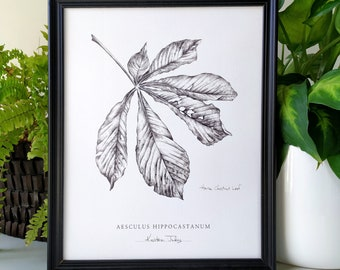 Chestnut Leaf Botanical Art print by artist Kristen Johns, in graphite, 5x7 or 8x10 inches, for the nature and botanical lover