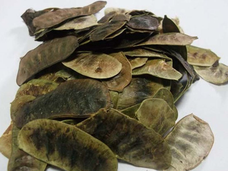 Acacia Concinna Shikakai Fruit Pod Dried Organic Pure Dried Etsy