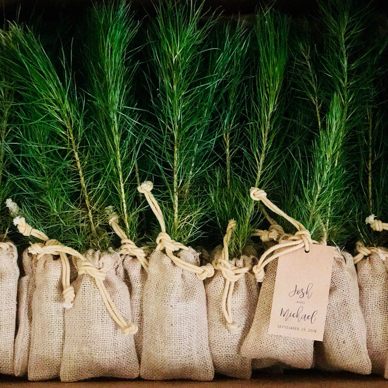Christmas Wedding Favor Christmas Tree Wedding Favor Tree Etsy