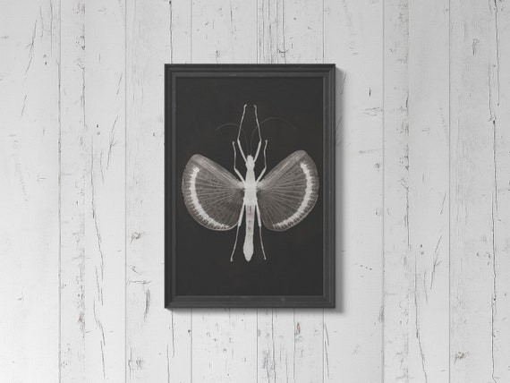 Monochrome Stick Insect Wall Art Print Heavy Weight Poster Etsy