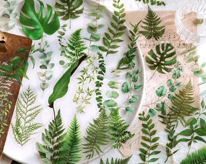 Leaf & Stem Stickers, Plant, Eucalyptus, Fern, Palm, Medium Size, Clear, Transparent