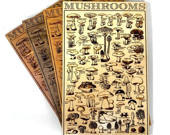 Home Decor - Mushroom Vintage Style Diagram with Scientific Names for Mushrooms, Wood Sign Wall Art Kitchen Decoration Housewarming Gift