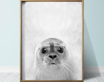 Seal Print Seal Poster Wall Art Print Animal Print Seal Art